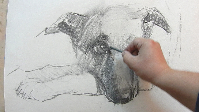 008 Взгляд молчаливого пса. Рисунок углем