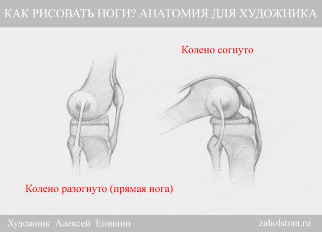 008 Как рисовать ноги_Анатомия для художника