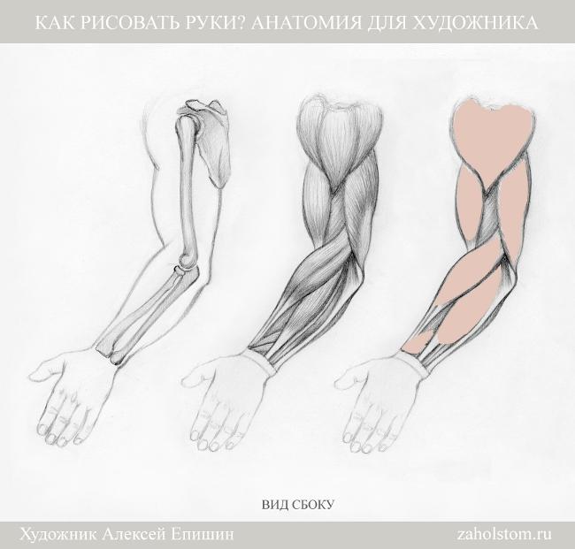 008 Как рисовать руки. Анатомия для художника
