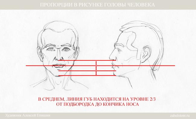 008 Пропорции в рисунке головы человека