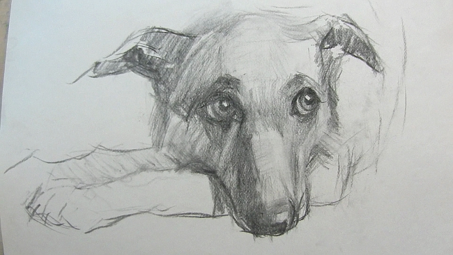009 Взгляд молчаливого пса. Рисунок углем