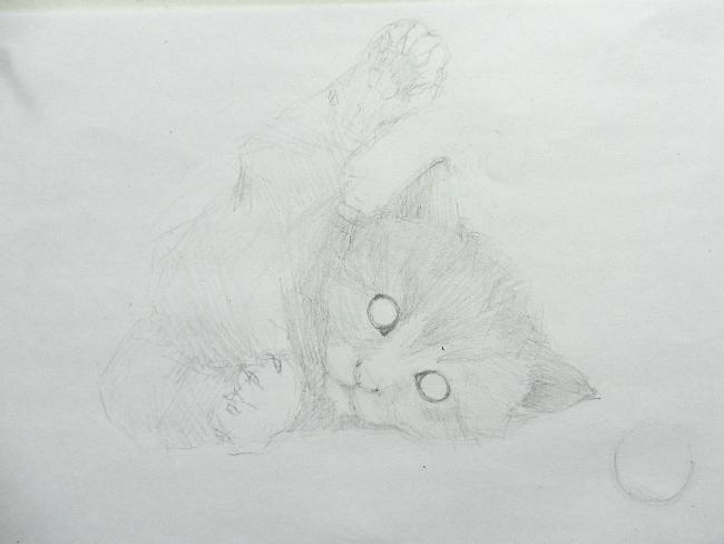 009 Игривый котёнок