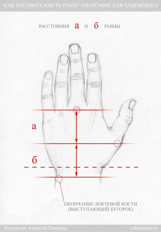 009 Как рисовать кисть руки. Анатомия для художника