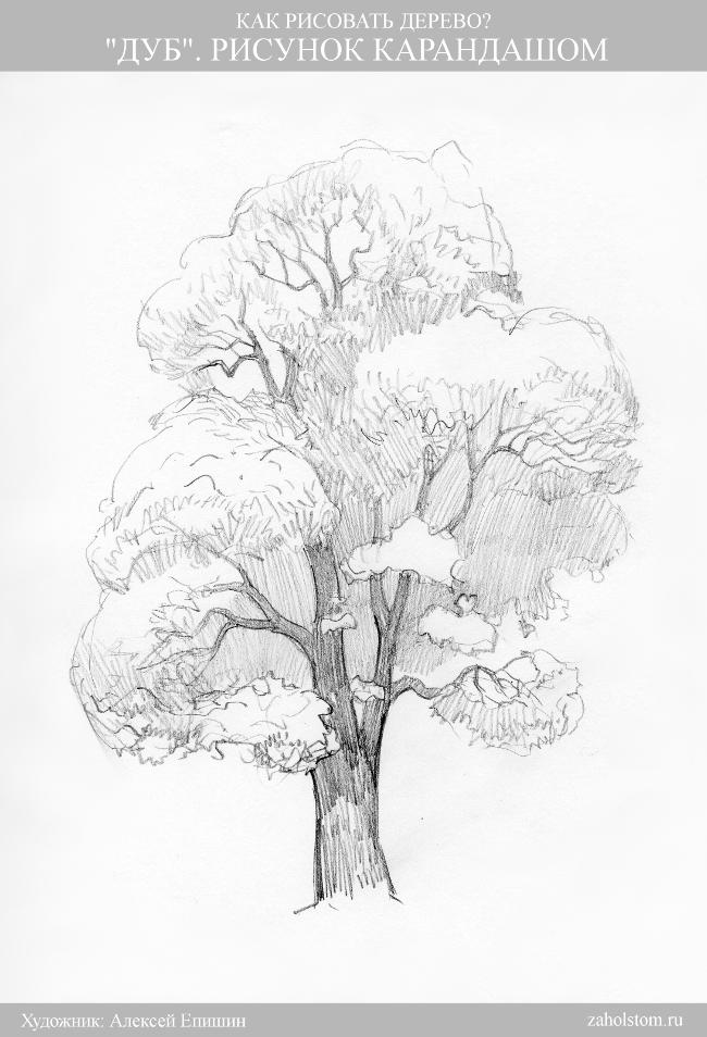 010а Как рисовать дерево. Дуб. Рисунок карандашом