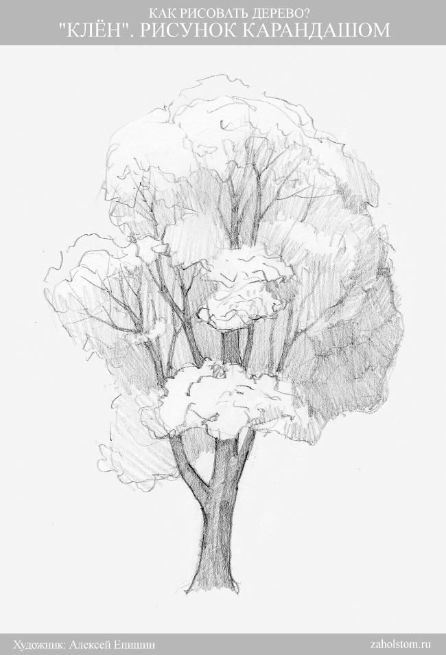 010 Как рисовать дерево. Клен. Рисунок карандашом
