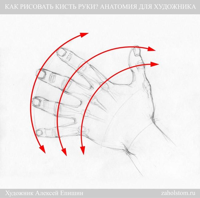 010 Как рисовать кисть руки. Анатомия для художника