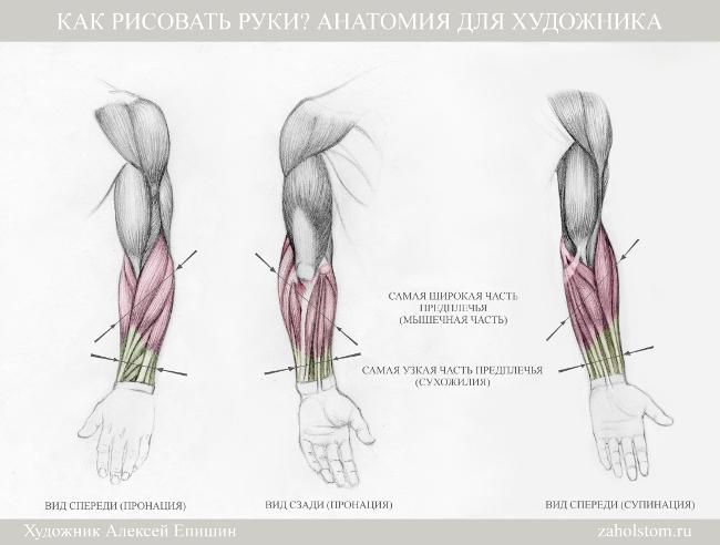010 Как рисовать руки. Анатомия для художника