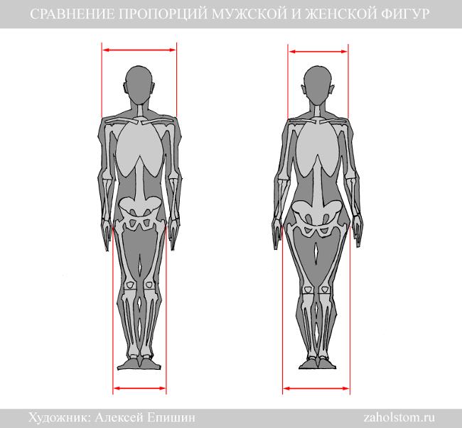 010 Сравнение пропорции мужской и женской фигур