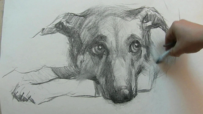 011 Взгляд молчаливого пса. Рисунок углем