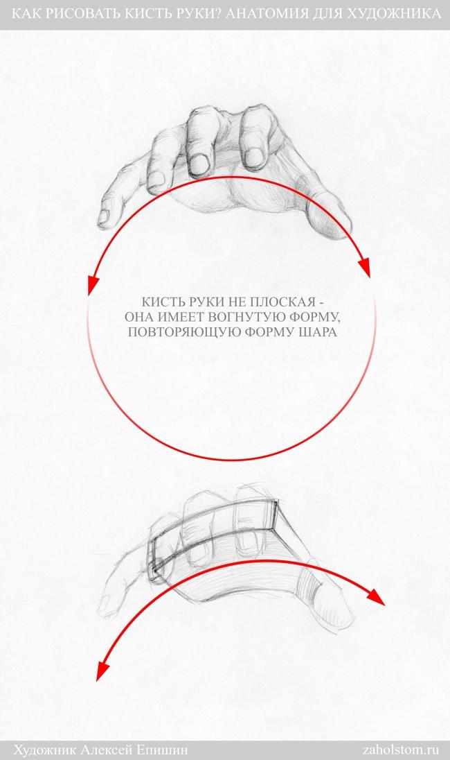 011 Как рисовать кисть руки. Анатомия для художника