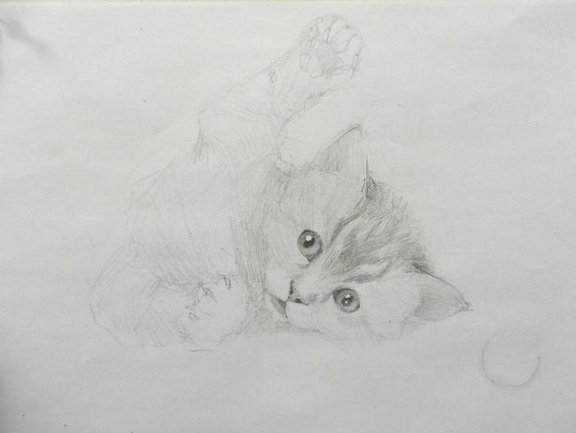 012 Игривый котёнок