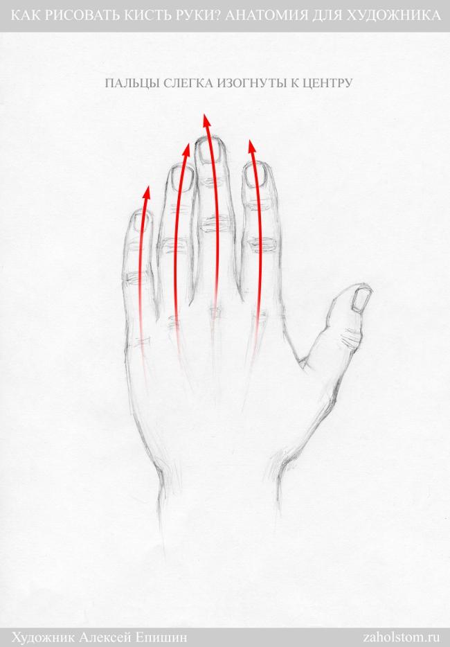 012 Как рисовать кисть руки. Анатомия для художника