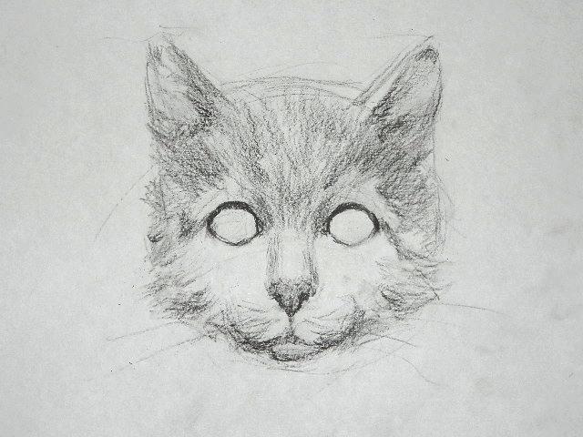 012 Как рисовать кошку
