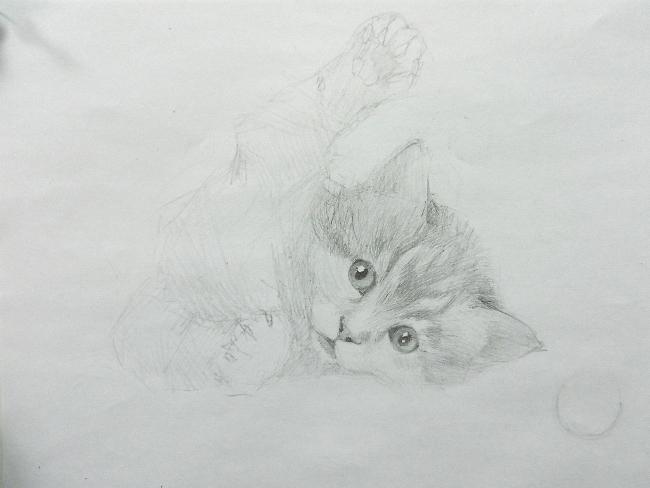 013 Игривый котёнок
