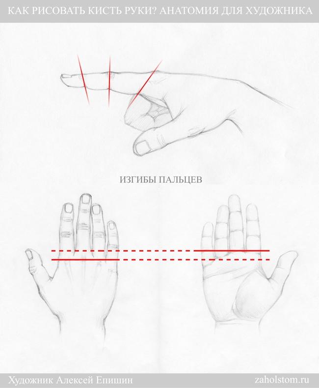 013 Как рисовать кисть руки. Анатомия для художника