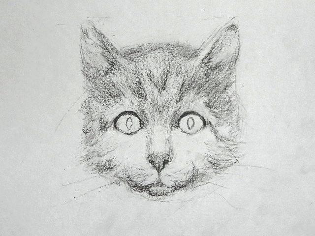013 Как рисовать кошку