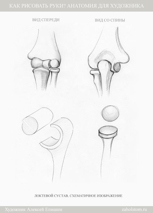 013 Как рисовать руки. Анатомия для художника