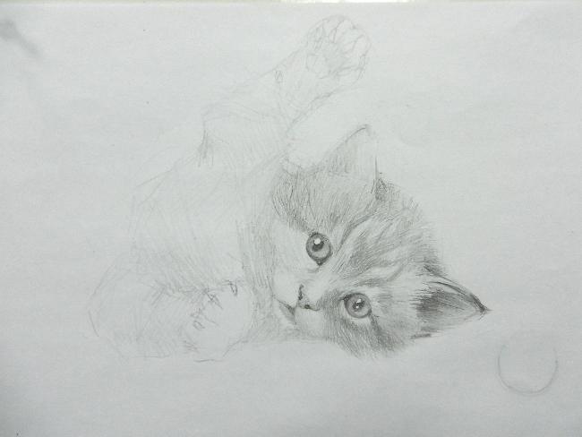 014 Игривый котёнок