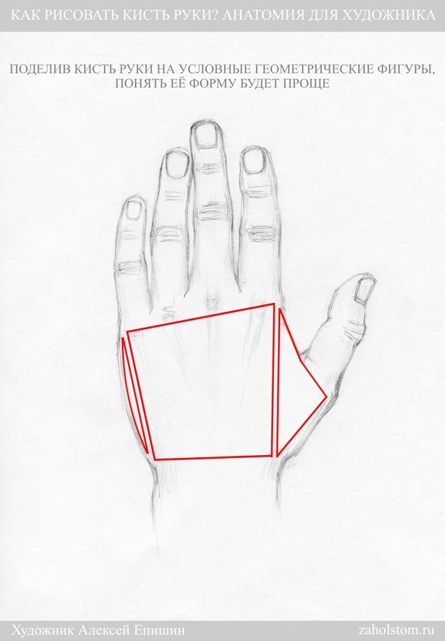 014 Как рисовать кисть руки. Анатомия для художника