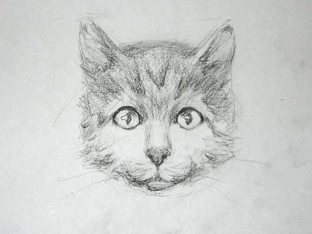 014 Как рисовать кошку