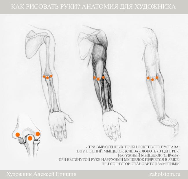014 Как рисовать руки. Анатомия для художника