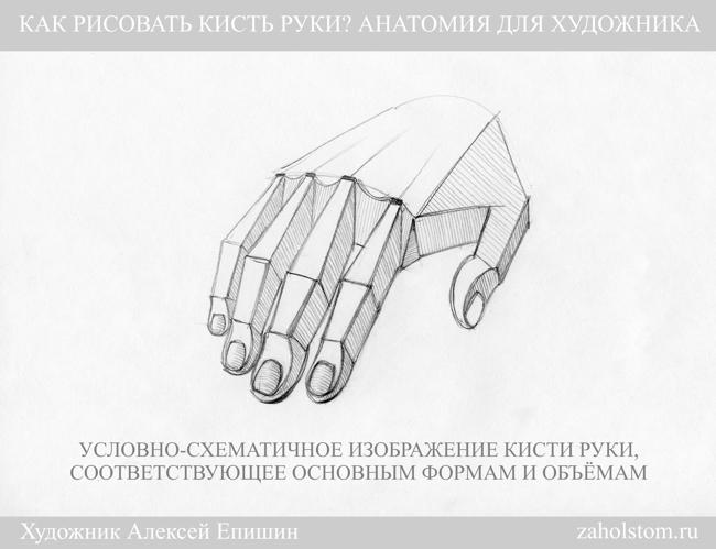 015 Как рисовать кисть руки. Анатомия для художника