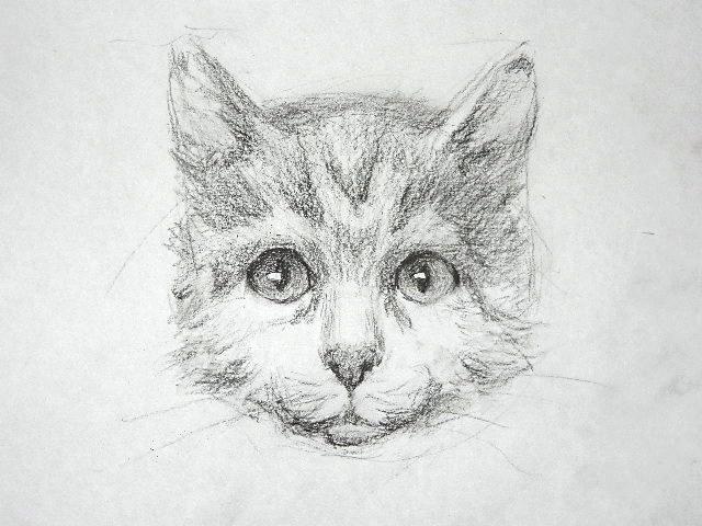 015 Как рисовать кошку