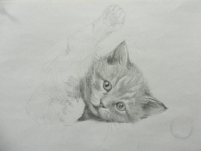 016 Игривый котёнок