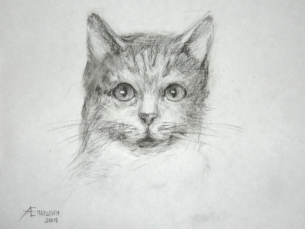017 Как рисовать кошку? Художник Алексей Епишин
