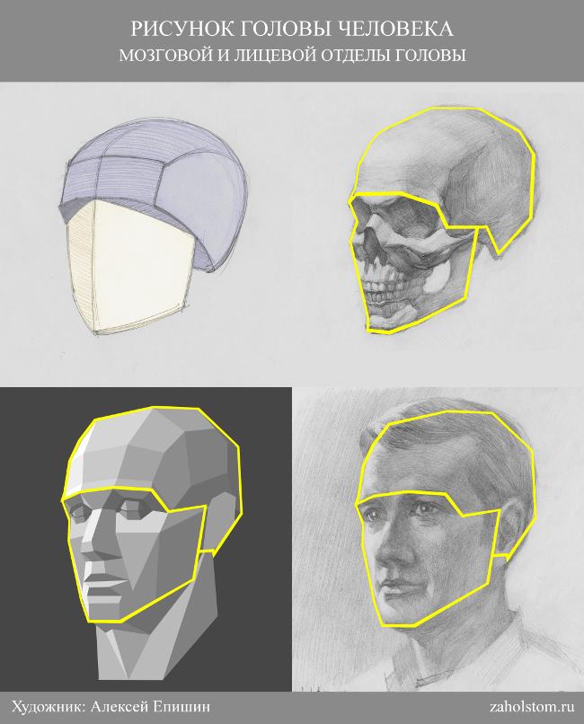 017 Как рисовать портрет. Мозговой и лицевой отделы головы