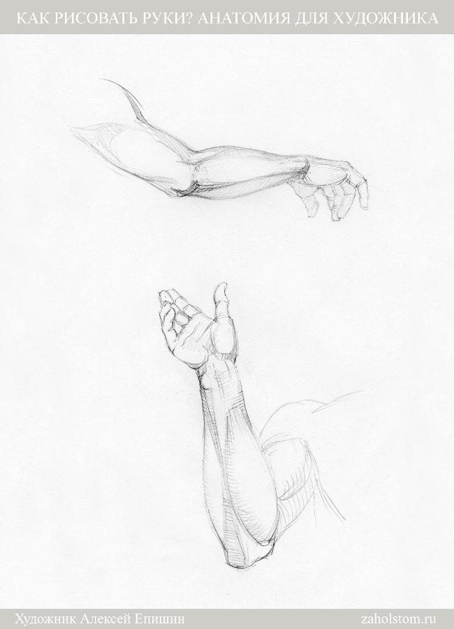 017 Как рисовать руки. Анатомия для художника