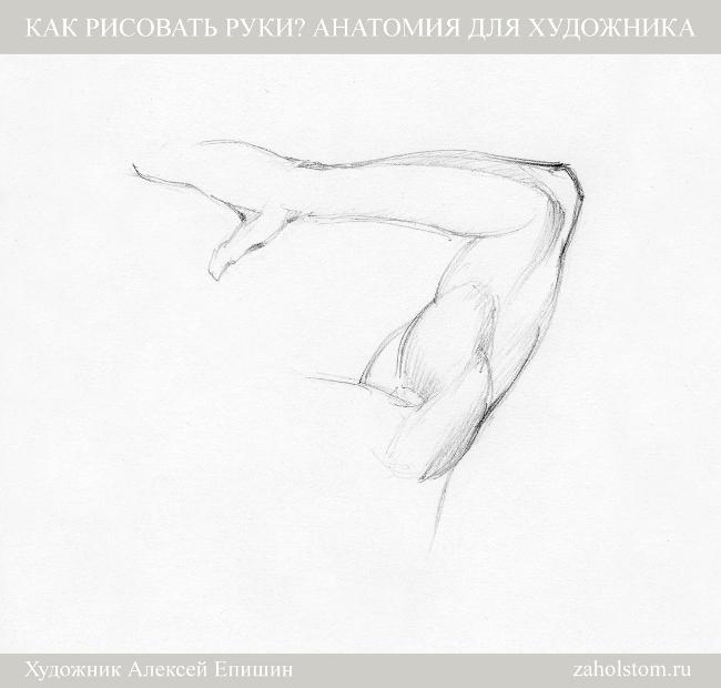 018 Как рисовать руки. Анатомия для художника