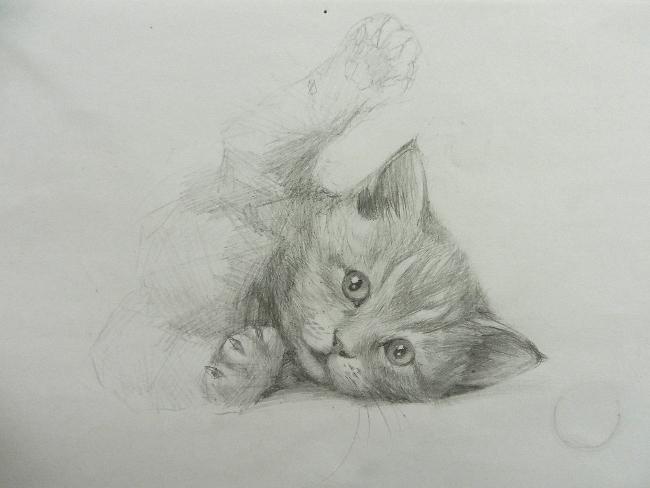 019 Игривый котёнок