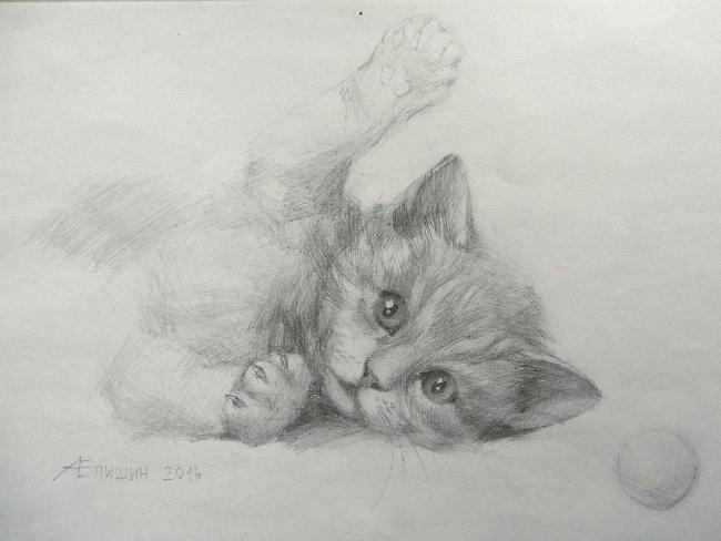 025 Игривый котёнок